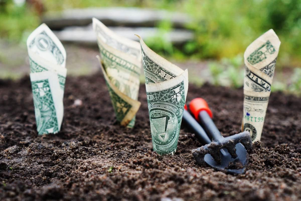 Dinheiro a ser semeado